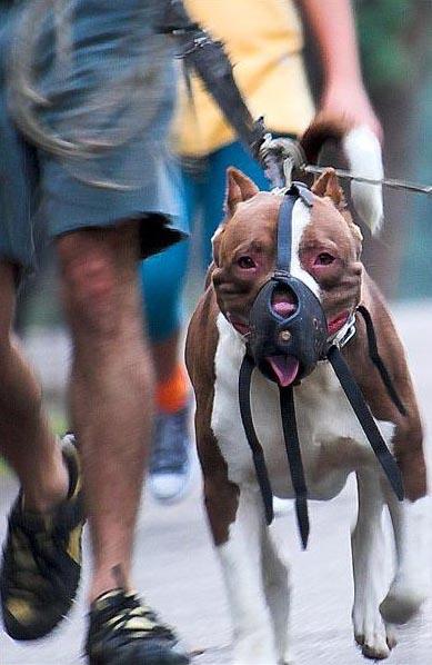fatal dog attacks
