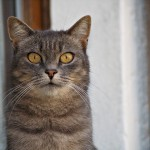 Guard cat on duty