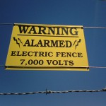 St. Petersburg, Florida may allow electric fences